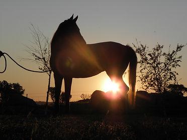 Location Bricouma Wagga Wagga Australia Arabian horse stud