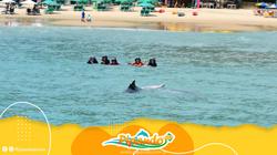 golfinhos em pipa