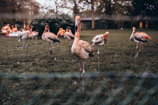 Hochzeitsreportage im Koelner Zoo mit Arlette & Marc