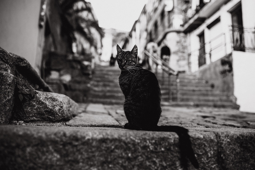 Katze posiert in Porto