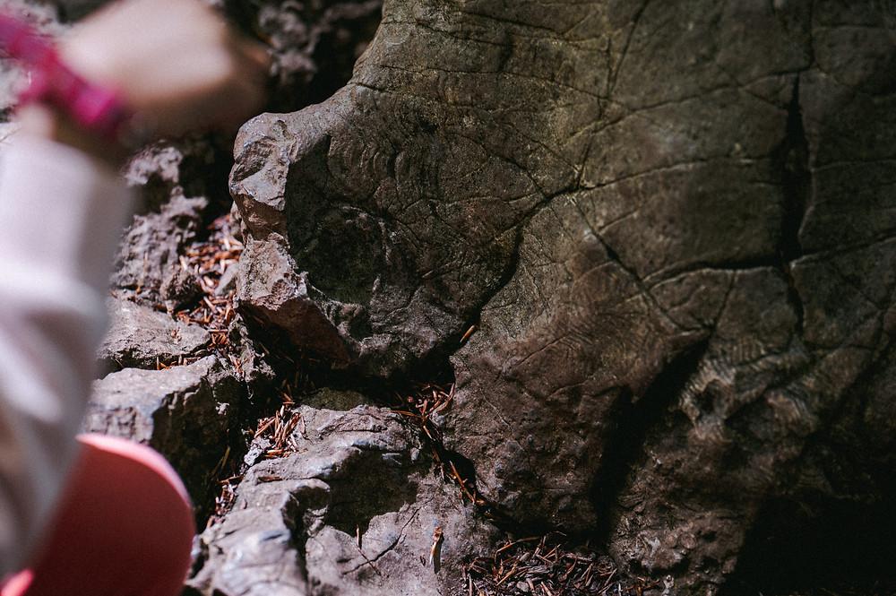 Das Felsenmeer in Hemer ist ein beruhigender und erstaunlicher Ort zugleich. Die Felsformationen, die aus dem Boden ragen, erinnern an kleine Riesen, die vor hunderten Millionen von Jahren lebten und diesen Ort bewachten. Ich habe ein paar Impressionen mit meiner Kamera eingefangen. Ein Brückenpfad für durch das beeindruckende Gelände von alten Felsformationen, Fossilien und Pflanzen. Christopher Reuter, Fotograf Sauerland.