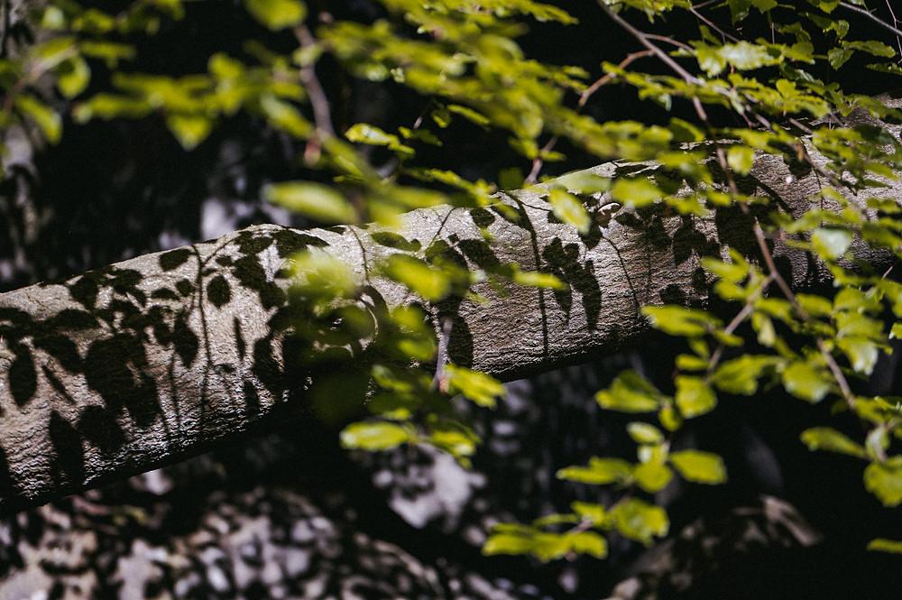 Das Felsenmeer in Hemer ist ein beruhigender und erstaunlicher Ort zugleich. Die Felsformationen, die aus dem Boden ragen, erinnern an kleine Riesen, die vor hunderten Millionen von Jahren lebten und diesen Ort bewachten. Ich habe ein paar Impressionen mit meiner Kamera eingefangen. Ein Brückenpfad für durch das beeindruckende Gelände von alten Felsformationen, Fossilien und Pflanzen.