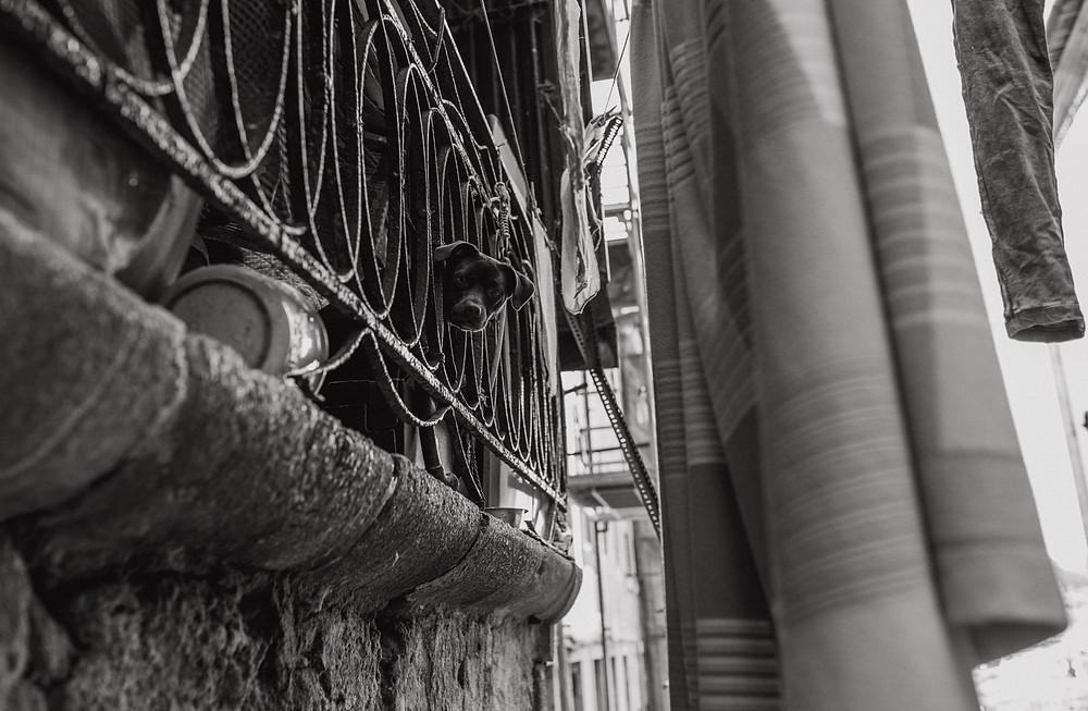 Hund auf Balkon in Porto