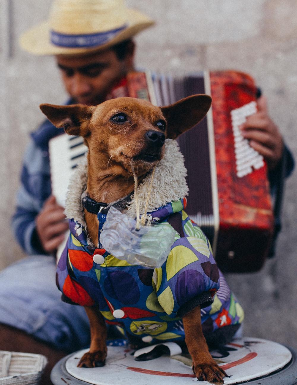 Portugal Straßenmusiker mit Hund
