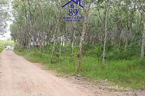 ขายที่ดินสวนยาง 17 ไร่  ต.ป่าพะยอม พัทลุง