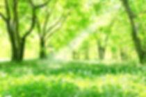 新緑.jpg
