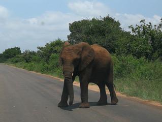 Kruger et Marloth Park
