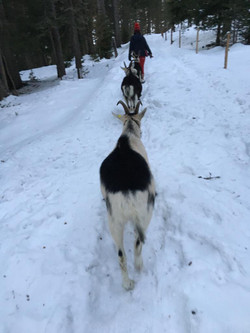 winter_spaziergang
