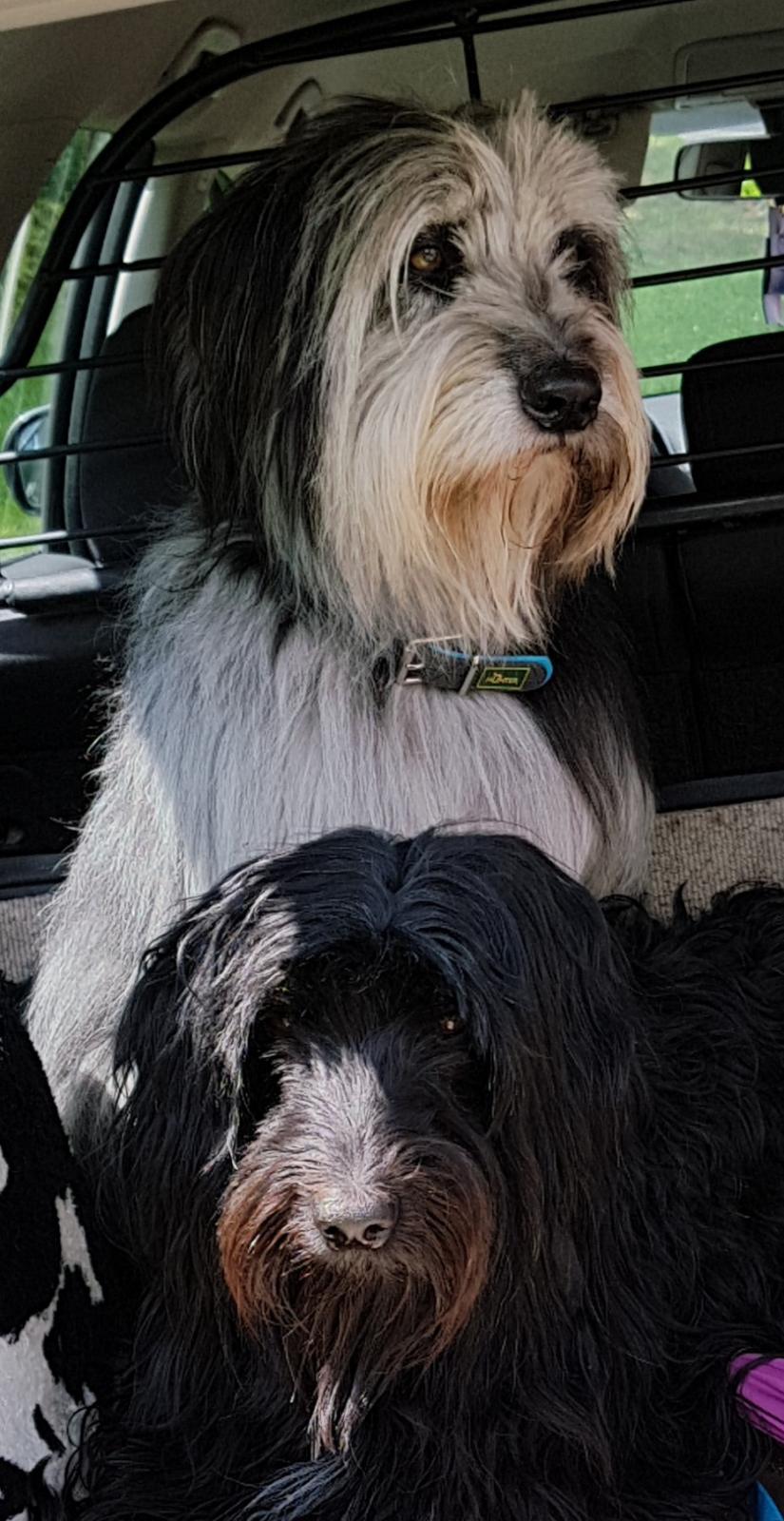 Hirtenhunde on tour
