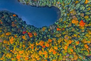 Aerial Drone view of colorful top of the forest and a lake at Autumn.jpg