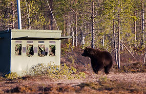 Bear in front of the photography hides W