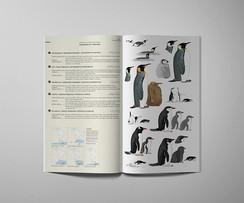 3-aves-sandra-marin.jpg