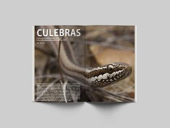 Reptiles1.jpg