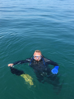 Snorkelling in the Solent