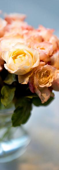 Les roses de Jardin odorantes