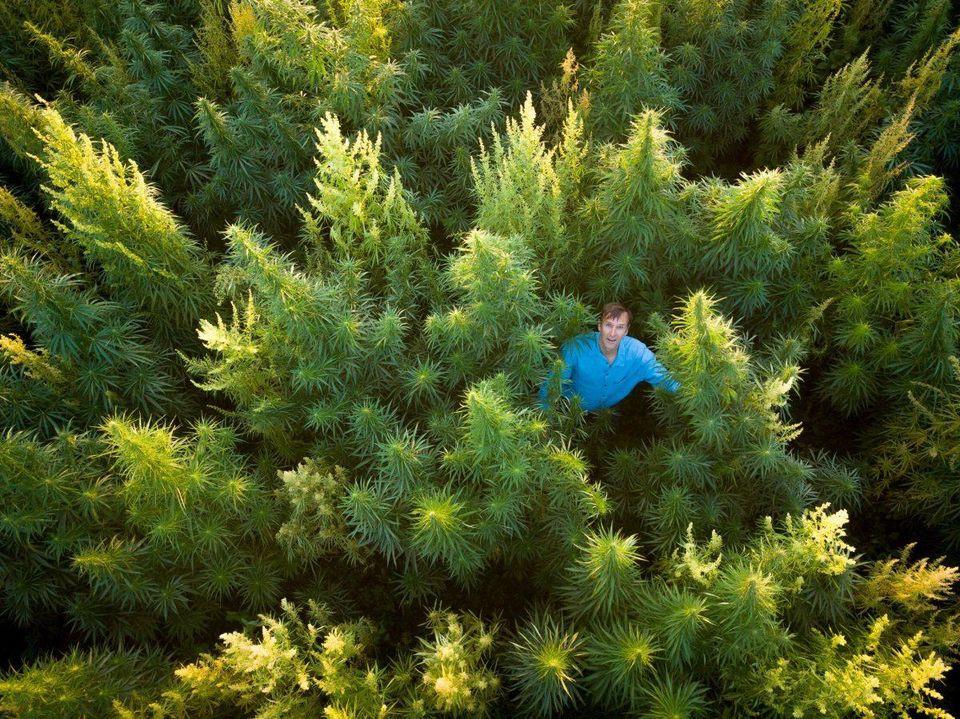 CEO John Roulac of RE Botanicals in a hemp field. RE Botanicals