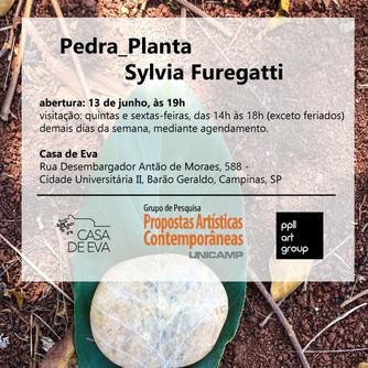 Pedra_Planta