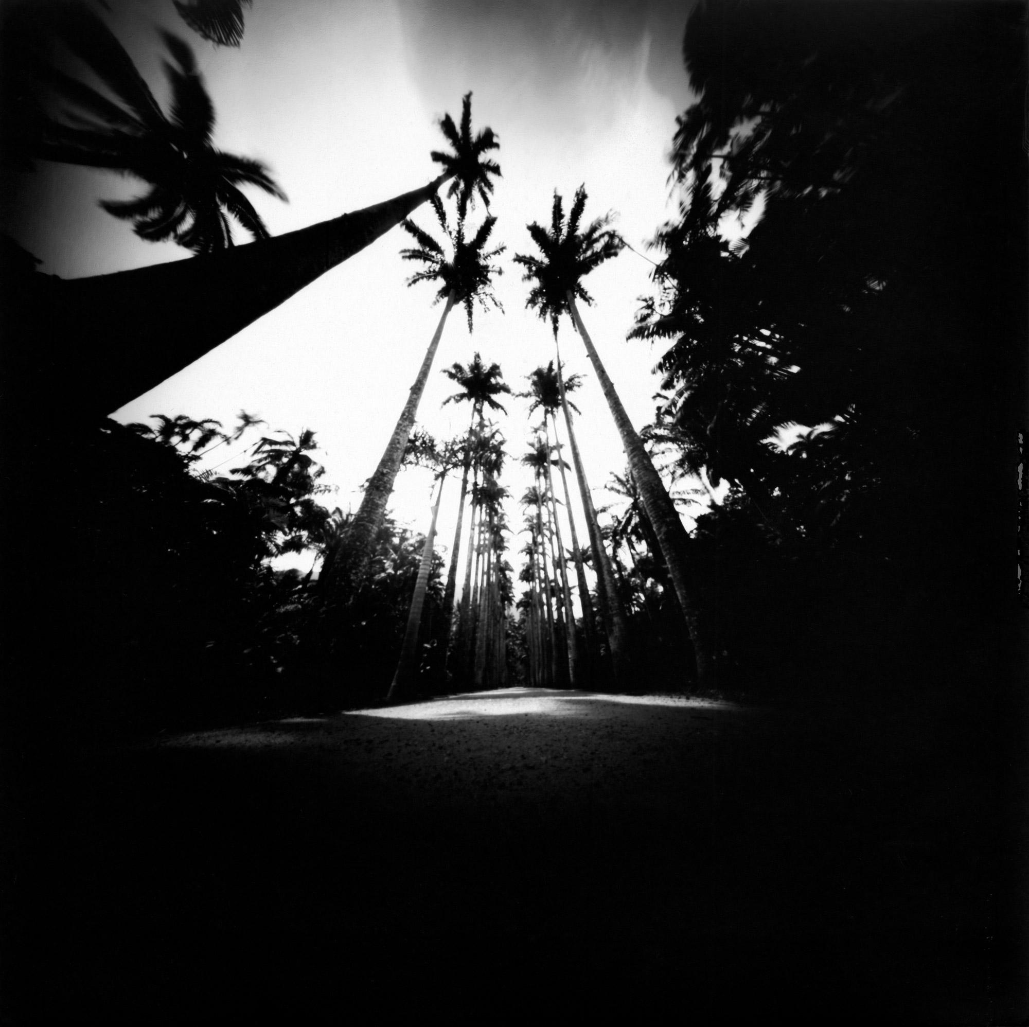 Jardim-Botanico-1_PB