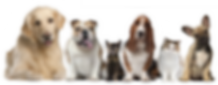 cats-and-dogs-png-hd-row-of-cute-dogs-an