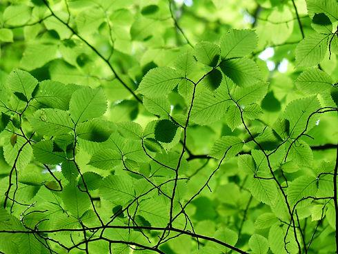 leaves-167478_1920.jpg