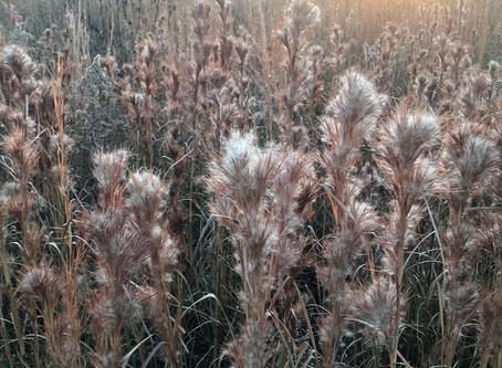 Harvesting the Bounty of the Fall Prairie