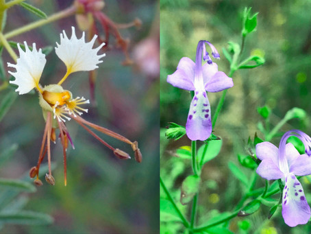 An Unforgettable Year in Native Plants