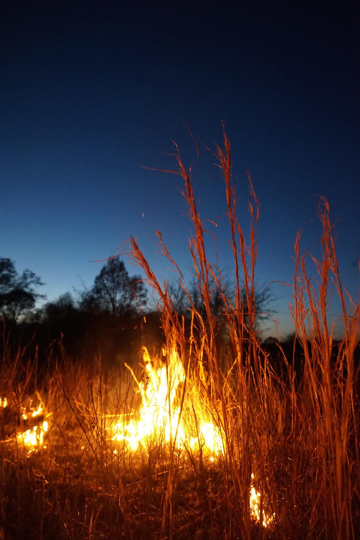 Broomsedge Blustem on fire
