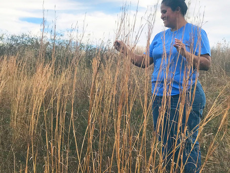 Rebuilding Prairie in Pastures: What We're Learning