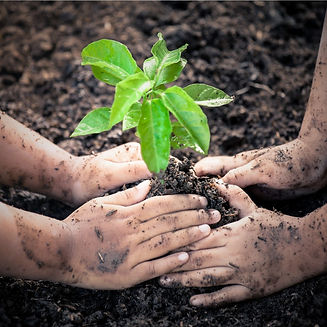 two-little-girls-hand-planting-young-tre