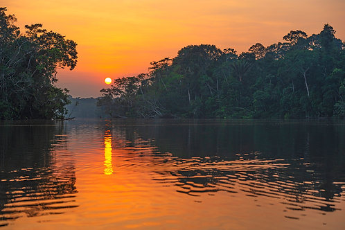 Wk 2: Wonders of the Peruvian Amazon Jungle: A Trip to Manu - Virtual