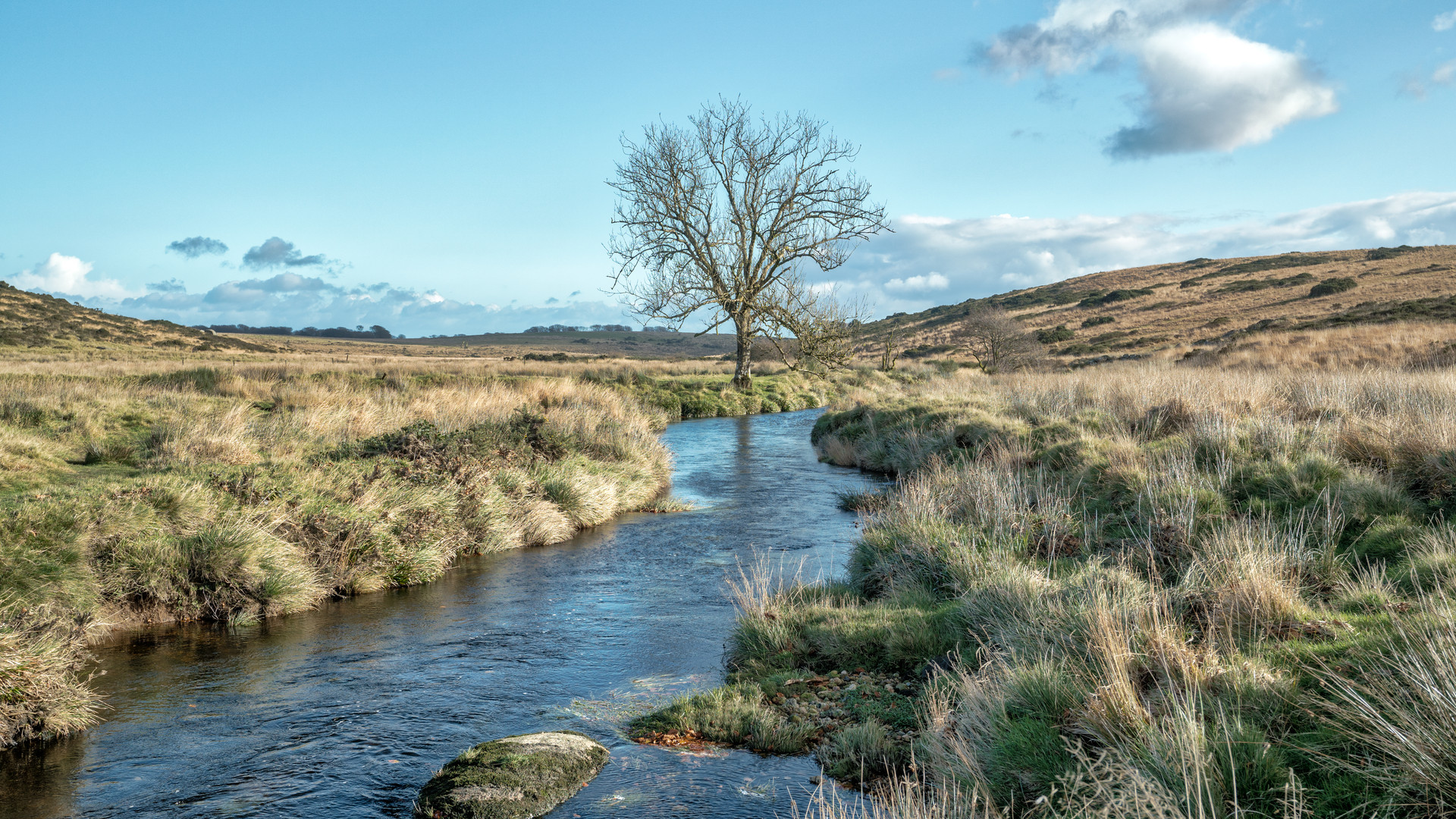Lone Tree (Two Bridges) 2018
