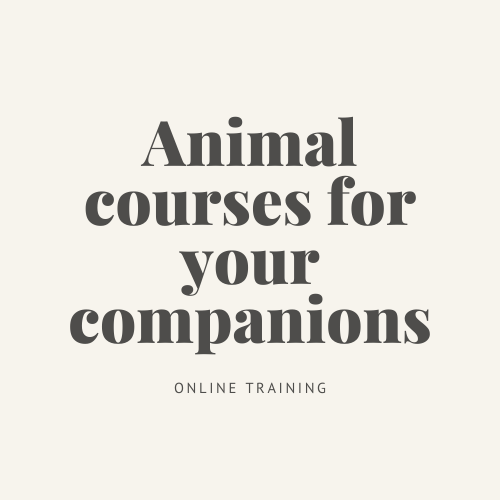Animal Courses for your companions