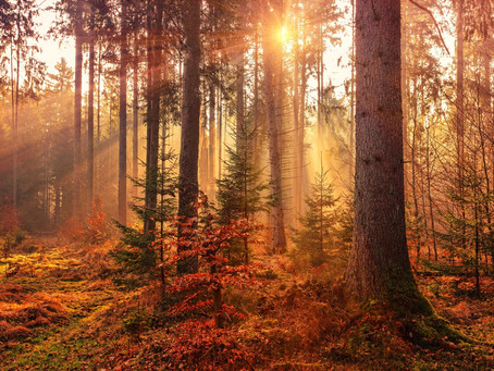 How trees are talking to you and how to listen to them