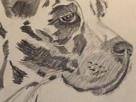 I sketched a dog in town. First time I've sketched a dog live.