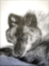pawprints J.jpg