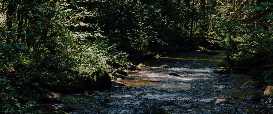 river%20surrounded%20by%20trees_edited.j