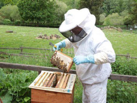 Les abeilles sont nos amies ! Rencontre avec le SAVE