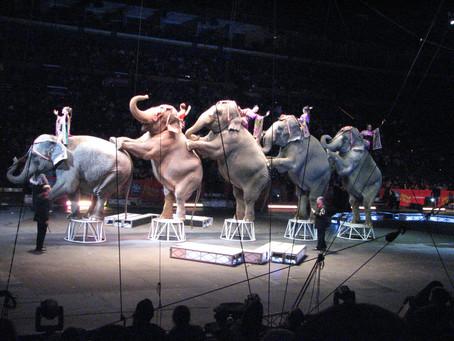 Non les animaux n'ont pas leur place dans les cirques