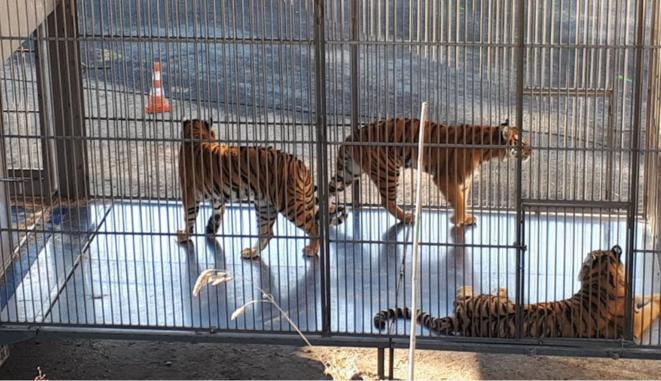 Alerte sur la situation des animaux des cirques