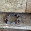 Thumbnail: Garden Quartz Bracelet