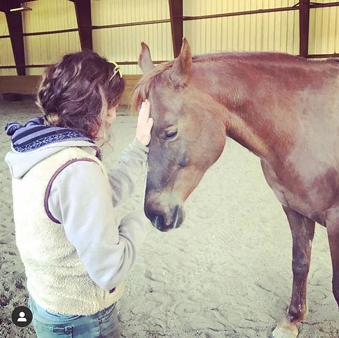 horse3.jpeg