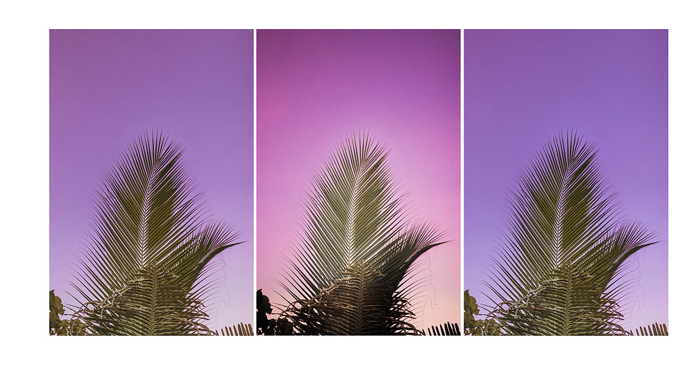 Sunset in Lovina with Palmtrees