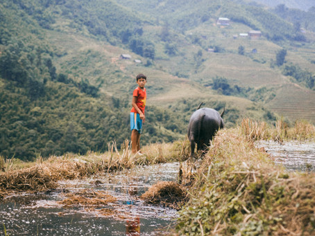 Travel Diary #3 : Lost in the fog of SaPa