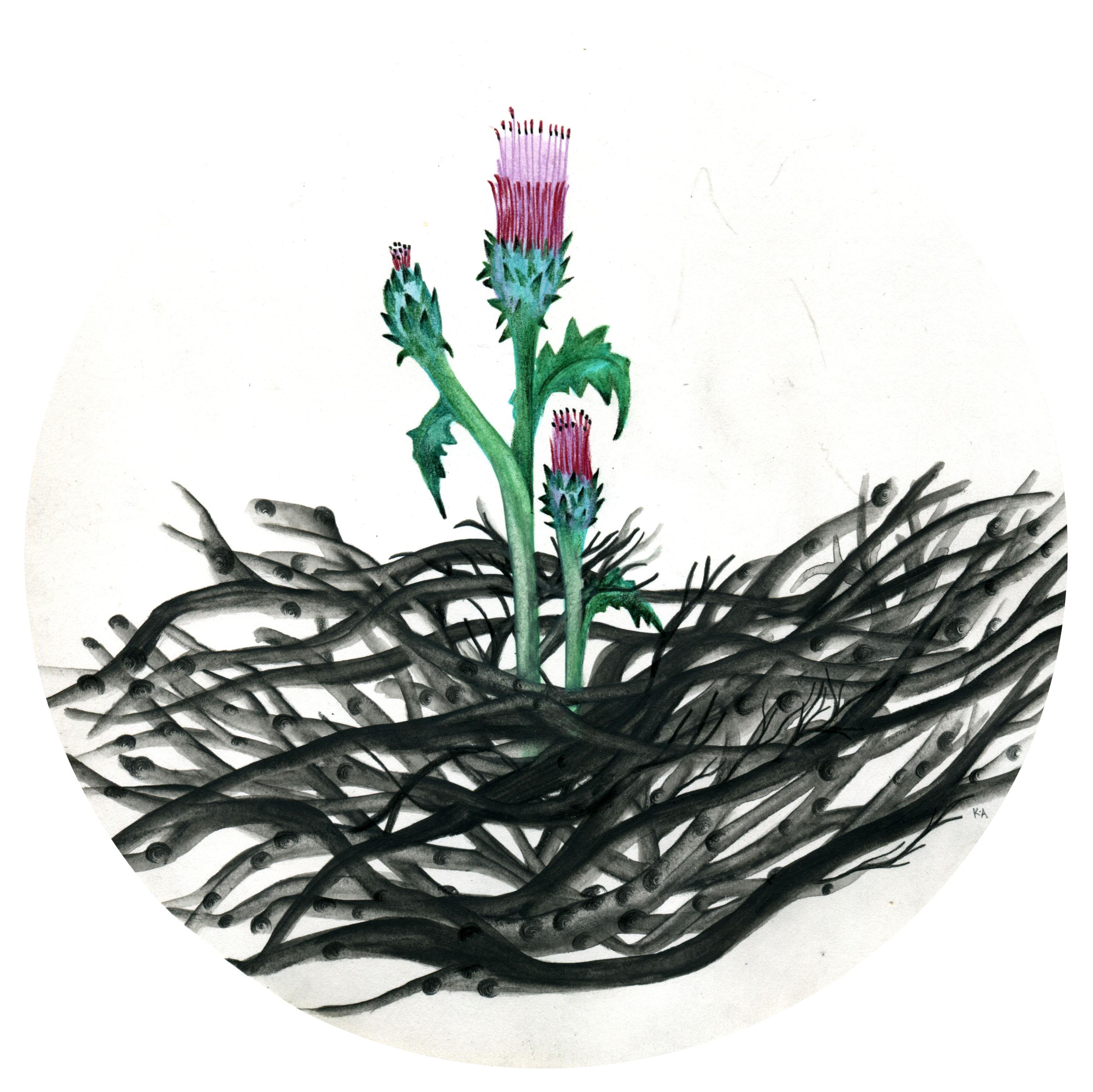 """""""Cactus5"""""""