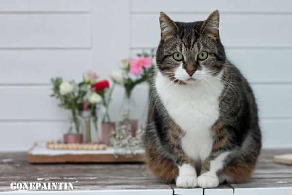 Katze mit Blumenvasen