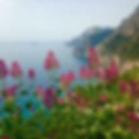 Med flowers.jpg
