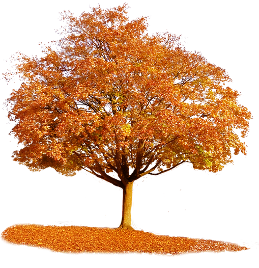 fall-tree-png-5.png