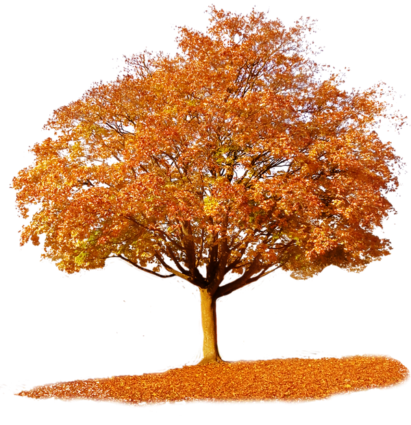 fall-tree-png-6.png