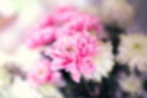 botany-flower-pink-4331.jpg