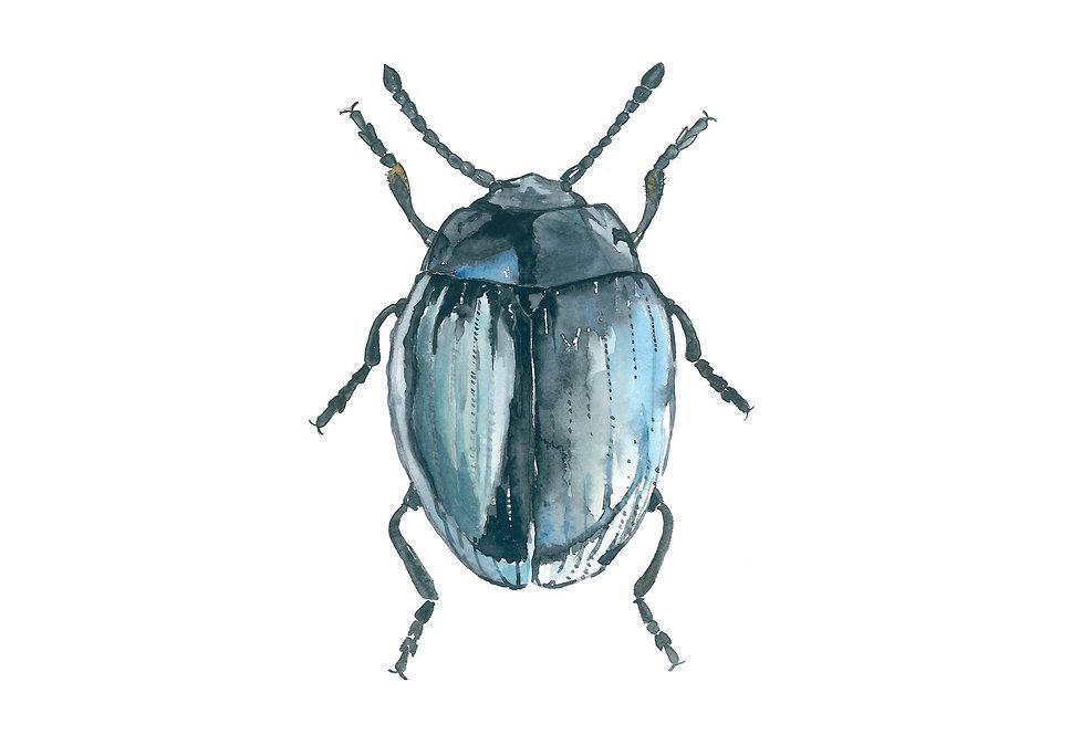 uu_beetles.jpg